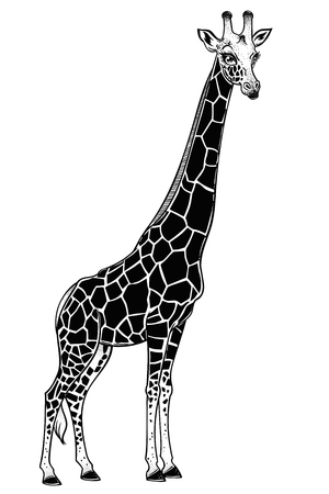 Illustration for Giraffe, spotted long neck African animal. Nature art, exotic tattoo, print, t-shirt design. Isolated vector artwork. - Royalty Free Image