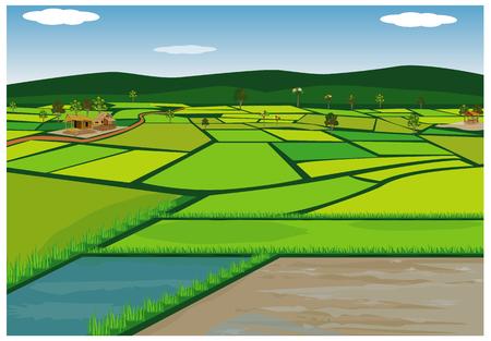 Illustration pour big paddy field vector design - image libre de droit