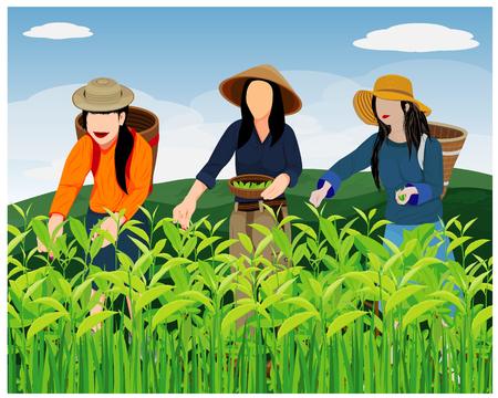 Ilustración de agriculturist harvest tea leaves vector design - Imagen libre de derechos