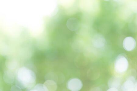 Photo pour Abstract Green Bokeh Light Background - image libre de droit