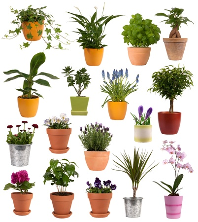 Flowers and plants in pots isolated on white