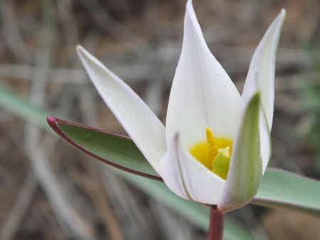 A flower with pointed petals