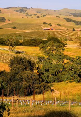 Vineyards in Napa Valley at sunset