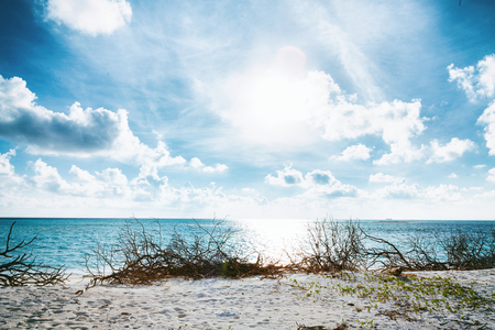 Wild Beach at Maldives island Fulhadhoo with white sandy beach and sea, snags gro, fluffy clouds in blue sky