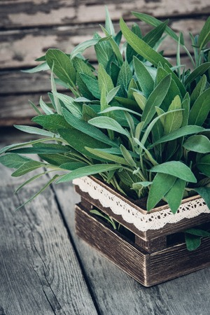 Salvia officinalis. Sage leaves on old wooden table. Garden sage. Rustic wooden box and handmade lace. Retro magazine picture. Copy space.
