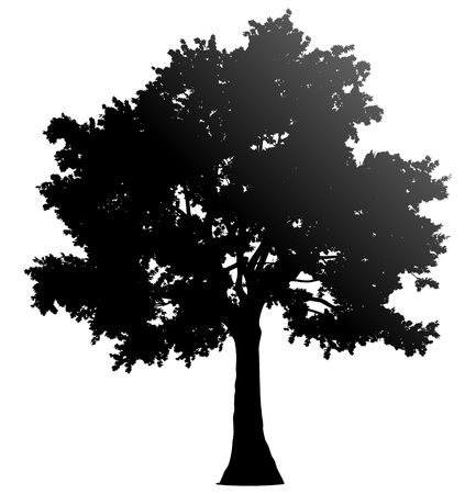 Illustration pour Tree profile silhouette isolated - black gradient detailed - vector illustration - image libre de droit