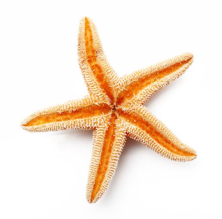 Photo for isolated starfish on white background - Royalty Free Image