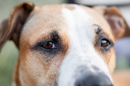 Photo pour Close-up portrait of a dog, focused on the eyes. Macro view of dog's eyes outdoors in natural conditions, shallow depth of field - image libre de droit