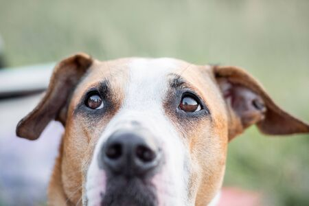 Photo pour Close-up portrait of a dog looking up, focused on the eyes. Macro view of dog's eyes outdoors in natural conditions, shallow depth of field - image libre de droit