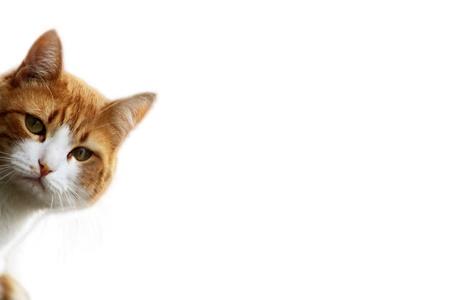 Playful kitten in wait for prey position