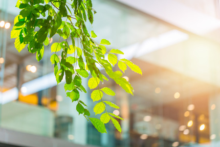 Photo for eco building or green office plant tree and garden in city concept. - Royalty Free Image
