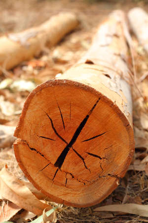 Cut  tree logging
