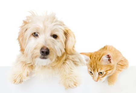 Cat and Dog above white banner  isolated on white background