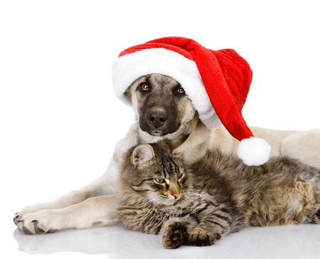 Cat and Dog with Santa Claus hat  isolated on white background
