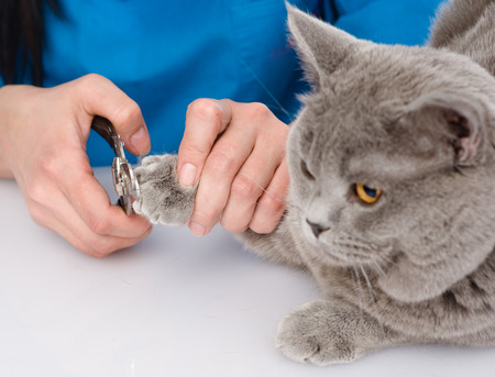 vet cutting cat toenails  isolated on white background