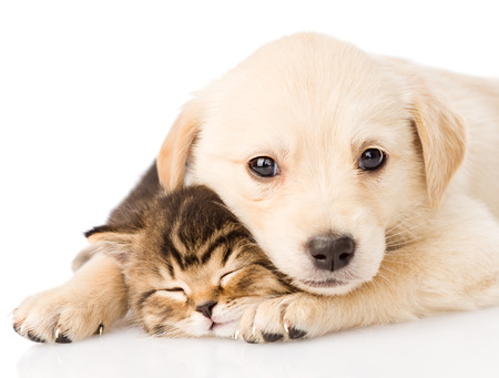 baby puppy dog and little kitten together  isolated on white background