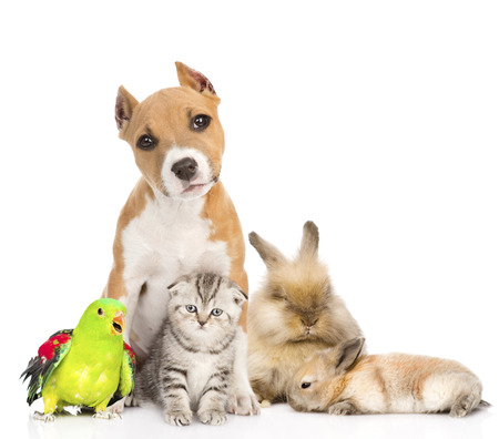 Group of pets together in front  Isolated on white background