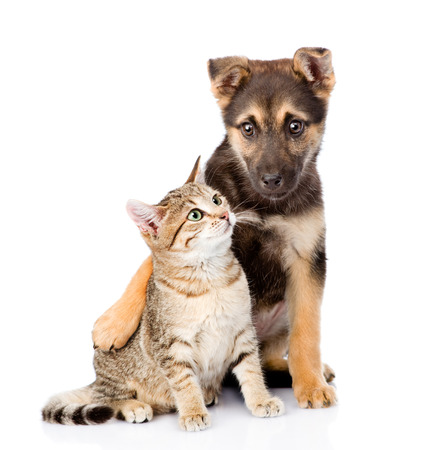 Photo pour crossbreed dog embracing small tabby cat. isolated on white background - image libre de droit