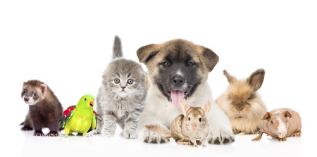 large group of pets together in front. Isolated on white background