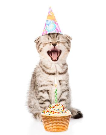 Party Cat Lizenzfreie Bilder Und Fotos