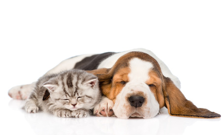 Kitten and puppy sleeping together. isolated on white background