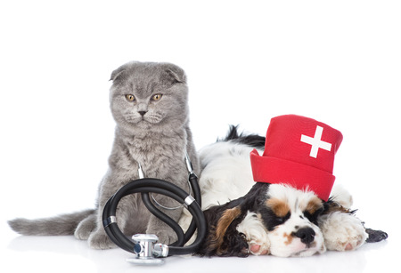 Kitten with stethoscope on his neck and Cocker Spaniel puppy wearing nurses medical hat. isolated on white background