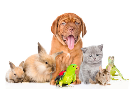 Photo pour Group of pets together in front view. isolated on white background. - image libre de droit