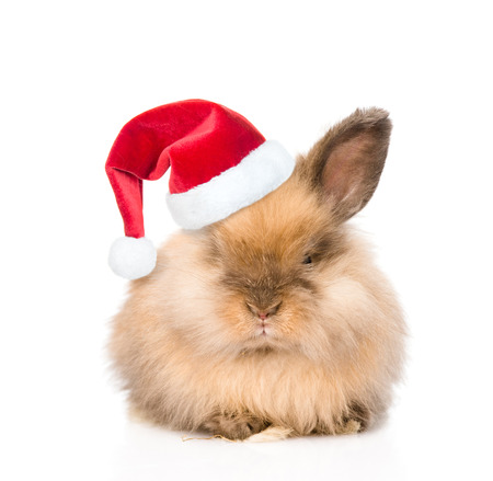 Cute rabbit in red christmas hat. isolated on white background.
