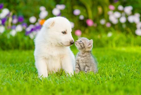 Photo pour Kitten kissing White Swiss Shepherd`s puppy on green grass. - image libre de droit