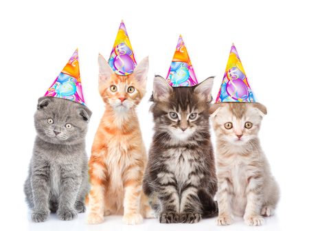 Large Group Of Small Cats With Birthday Hats Isolated On White Background Lizenzfreie Bilder Und Fotos