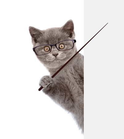 Photo pour Cat wearing glasses holding a pointing stick and points on empty banner. isolated on white background. - image libre de droit