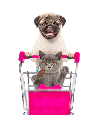 Photo pour Pug puppy pushing a shopping cart, in which a cat sitting. isolated on white background. - image libre de droit