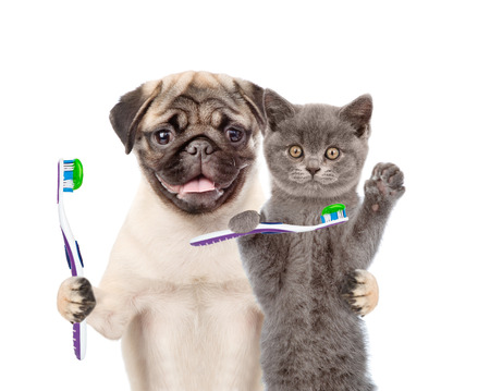 Photo pour Puppy and kitten with toothbrushes. isolated on white background. - image libre de droit
