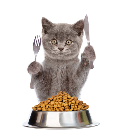 Photo pour Cat with bowl of dry dog food holds a knife and fork. isolated on white background. - image libre de droit