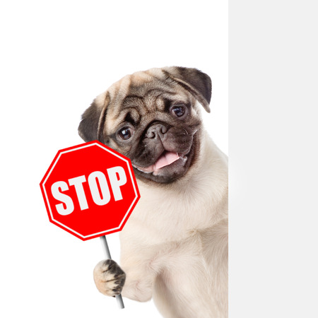 Photo pour Dog peeking with the stop sign. Isolated on white background. - image libre de droit