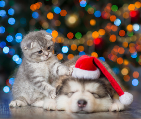 Photo pour playful kitten and sleepy puppy on a background of the Christmas tree. - image libre de droit
