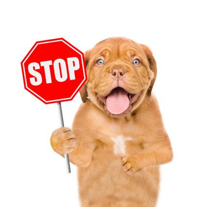 Foto de Dog holding stop sign. Isolated on white background. - Imagen libre de derechos