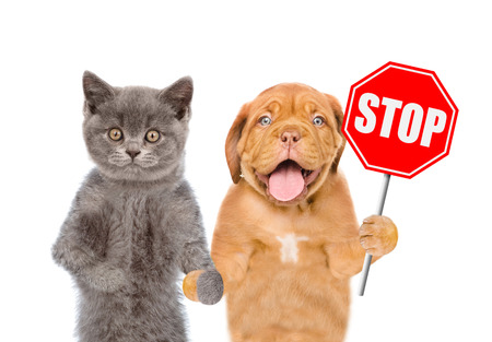 Photo pour Cat and dog with the stop sign. Isolated on white background. - image libre de droit