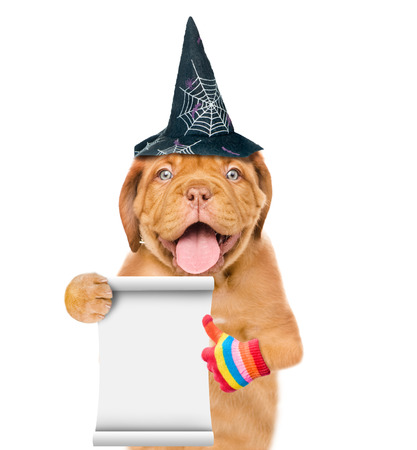 Funny puppy with hat for halloween and empty list showing thumbs up. isolated on white background.