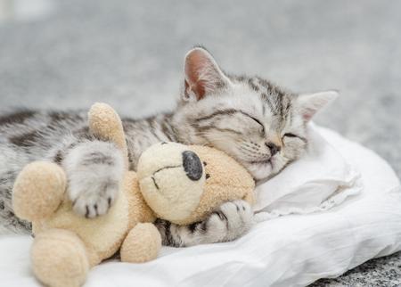 Photo pour Cute kitten sleeping with toy bear. - image libre de droit