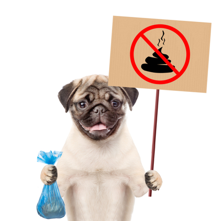 puppy holds plastic bag and sign no dog poop. Concept cleaning up dog droppings. isolated on white background.