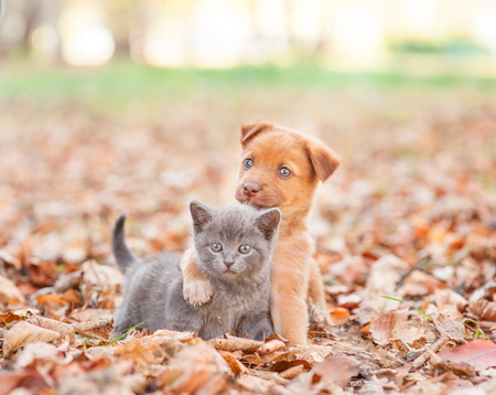 Foto per homeless puppy hugging a sad kitten on autumn leaves. - Immagine Royalty Free