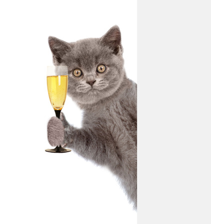 Foto de Cat holding glass of champagne behind white banner. isolated on white background. - Imagen libre de derechos