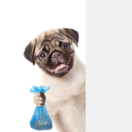 Foto de Puppy holds plastic bag behind white banner. Concept cleaning up dog droppings. isolated on white background. - Imagen libre de derechos