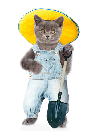 Cat farmer in summer hat with shovel. isolated on white background.
