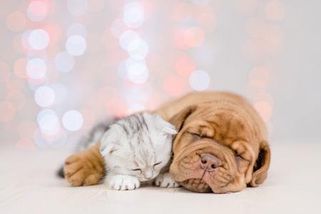 Photo pour Puppy hugging baby kitten. Christmas holidays background. - image libre de droit