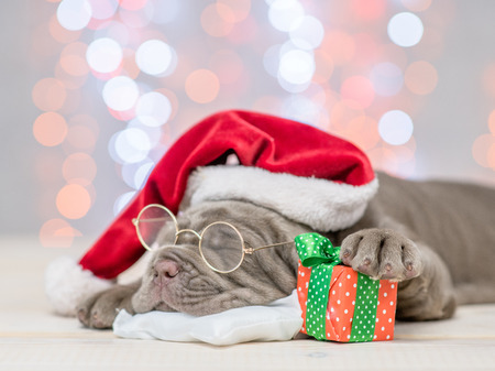 Foto de Mastiff puppy with red santa hat and gift box sleep on festive background. - Imagen libre de derechos