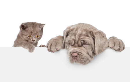 Foto de Cat and dog over white banner looking down. isolated on white background. - Imagen libre de derechos