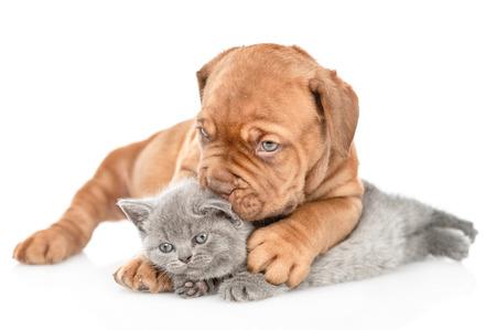 Photo pour Playful puppy kisses kitten. isolated on white background. - image libre de droit