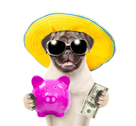Photo pour Funny puppy in summer hat and sunglasses is holding a piggy bank and dollars usa. isolated on white background. - image libre de droit